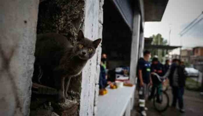 Detectan un gato infectado con coronavirus en España
